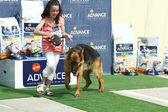 Madrid španělsko, 21 července 2013: výstava národní mistrovství — Stock fotografie