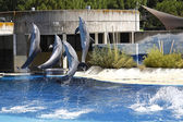 Dolphins jumping in the water — Stock Photo
