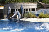 Delfiner som hoppar i vattnet — Stockfoto