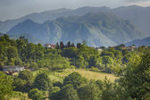 Green meadow with trees and mountains in the background — Stock Photo