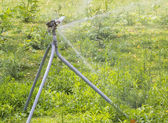 Sprinkler irrigation running — Stock Photo