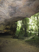 Cave in a forest of large trees — Stock Photo