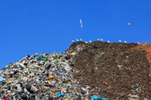 Many gulls on a huge mountain of trash — Stock Photo