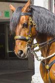 великолепная лошадь, с яркой золотой атрибутику — Стоковое фото