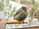 Nice little bird on a pencil relaxed — Stockfoto
