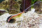 красочные море креветок — Стоковое фото