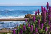 Calm Ocean with Purple Flowers in the foreground — Stock Photo