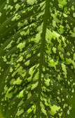 Leaf texture. — Stock Photo