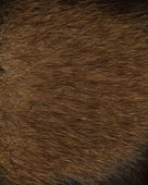 Fur texture. Beaver. — Stock Photo