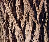 Wooden texture. — Stock Photo