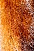 Fur texture. — Stock Photo