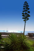 Amadores in Gran Canaria Canary islands — Stock Photo