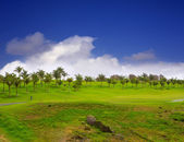 Gran Canaria Meloneras golf green grass — Stock Photo