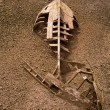 Boat ship skeleton half buried in sand - Stock Photo