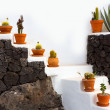 Cactus clay pots in Lanzarote over white stairs — Stock Photo #12752393