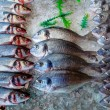 Seabass and sea bream over ice - Stock Photo