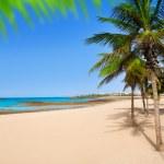 Arrecife Lanzarote Playa Reducto beach palm trees — Stock Photo #12759787