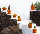 Cactus clay pots in Lanzarote over white stairs — Stock Photo