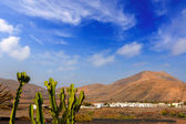 Lanzarote Yaiza with cactus and mountains — Stock Photo