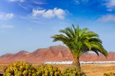 Ajaches mountain in Lanzarote Punta Papagayo — Stock Photo