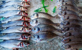 Seabass and sea bream over ice — Stock Photo