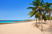 Arrecife Lanzarote Playa Reducto beach palm trees — Stock Photo