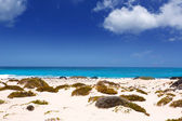 Lanzarote Orzola white sand beach in Canaries — Stock Photo