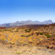 Canary islands in Tenerife Teide National Park — Stock Photo