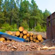 Pine tree felled for timber industry in Tenerife — Stock Photo #12823979