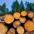 Pine tree felled for timber industry in Tenerife — Stock Photo #12824021