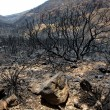 Black ashes of canary pine after forest fire at Teide - Foto Stock