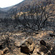 Black ashes of canary pine after forest fire at Teide — Stock Photo #12827568