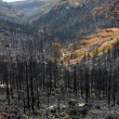 Black ashes of canary pine after forest fire at Teide - Foto de Stock  
