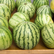 Big watermelon market display in a row - Stock Photo