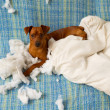 Naughty playful puppy dog after biting a pillow — Stok fotoğraf