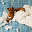 Stock Photo: Naughty playful puppy dog after biting pillow