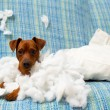 Naughty playful puppy dog after biting a pillow — Stock Photo #13298714