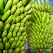 Canarian Banana Platano in La Palma — Stock Photo