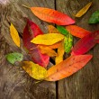 Autumn fall red golden dried leaves - Stock Photo