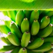 Canarian Banana plantation Platano in La Palma — Stock Photo