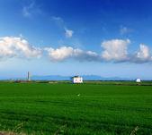 Verdi risaie in el saler presso valencia spagna — Foto Stock