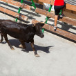 Running of the bulls at street fest in Spain — Stock Photo