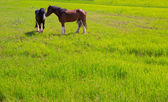 Horses in green yellow spring meadow — Stock Photo