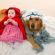 Stock Photo: Baby Little Red Riding Hood with wolf dog as grandma
