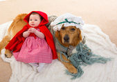 Baby Little Red Riding Hood with wolf dog as grandma — Stock Photo