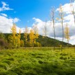 Autumn fall forest with yellow golden poplar trees — Stock Photo #19532731