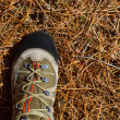 Hicker explorer feet boot detail on pine dried needles - Stock Photo
