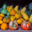 Autumn pumpkin collection as halloween background - Стоковая фотография