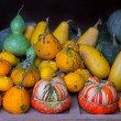 Autumn pumpkin collection as halloween background - Foto Stock