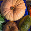 Melon and Pumpkin in autumn fall at market - Stock Photo